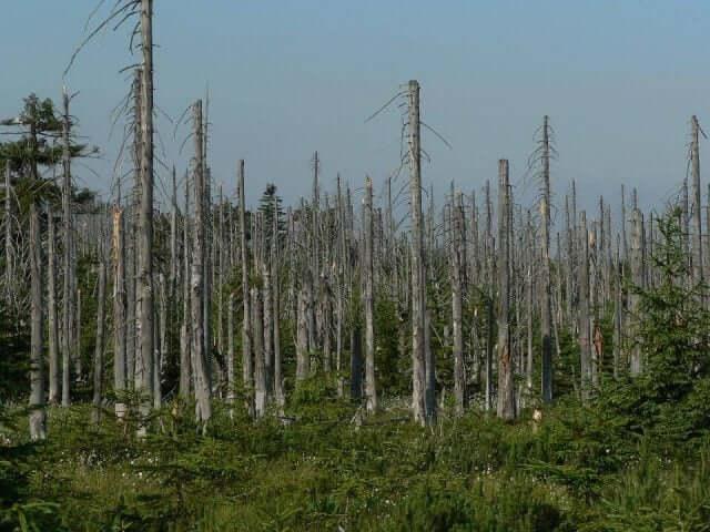 酸性雨の被害を受けた黒い森