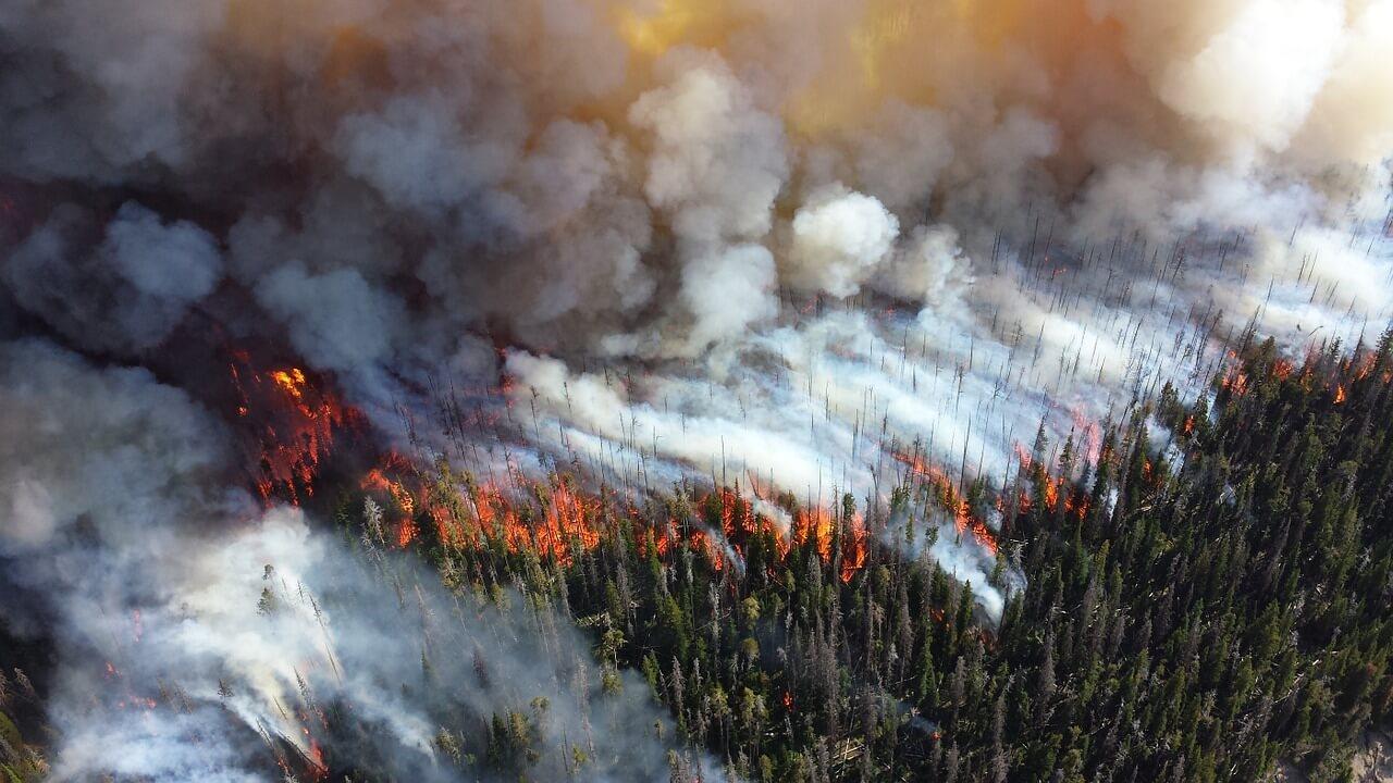 森林破壊_森林伐採_森林火災