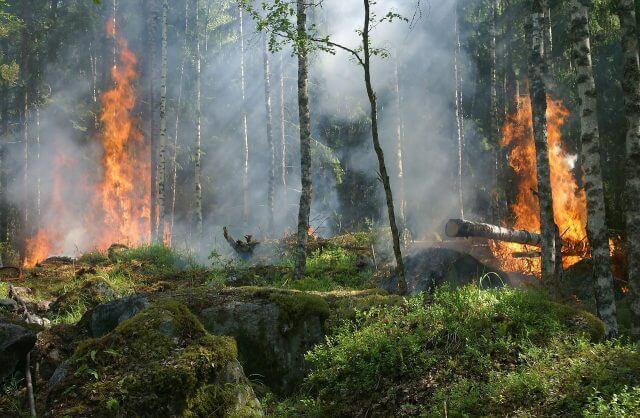 森林火災_非伝統的焼き畑農業